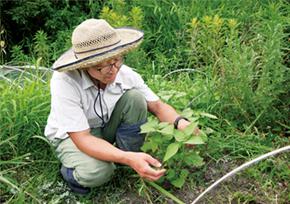 自然栽培玄米 甘酒コチュジャン(小太朗農園)